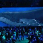 Google I/O Close Up of Widescreen Whale